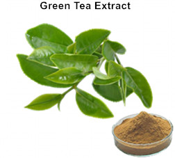 Natural Polyphenols Green Tea Extract